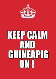 Meme Maker - Keep Calm and Guineapig on ! Meme Maker! via Relatably.com