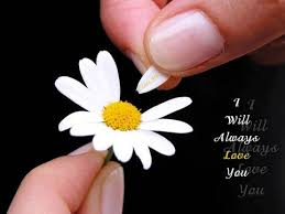 Love Flower Quotes Interesting I Will Always Love You Quote Picture