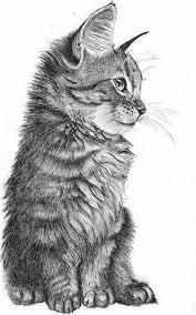 Immagini Da Disegnare A Matita Disegno Di Un Gatto Animale