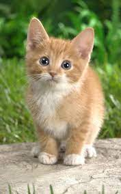 Cat Kittens Live Wallpaper for Android ...