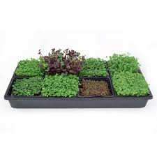 hydroponic sectional microgreens growing kit grow micro greens herbs indoor gardening all supplies seeds trays instructions etc
