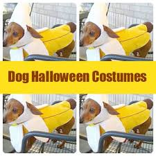 hello this is dog banana. dog halloween costumes by the sweet spot blog via @the // hello this is banana a