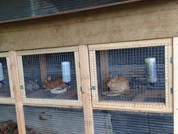rabbit hutches homemade wood and wire rh you com wire rabbit hutch bunny rabbit cages