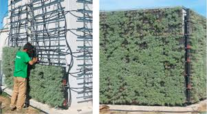 vertical greenery systems vgs for