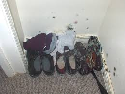 mold growing on shoes in a closet top ten list of things to know about mold 6 kill the