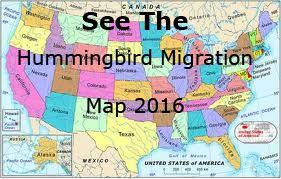2017 Hummingbird Migration Chart Hummingbird Migration Spring Fall Migration Information