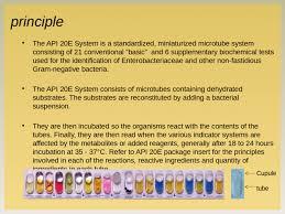Api 20e Principle The Api 20e System Is A Standardized