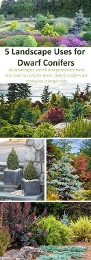 Japanese Garden Plants Best 25 Evergreen Garden Ideas On Pinterest Evergreen Landscape