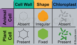 Venn Diagram Comparing Animal And Plant Cells A Brief Comparison Of Plant Cell Vs Animal Cell