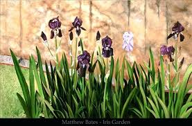 iris garden iris garden bates all rights reserved iris garden inn nashville in iris garden