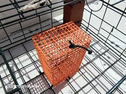 a rigid bait box or soft bait bag will hold your bait and keep the crab from devouring it quickly i use zip ties to secure them to the bottom of the