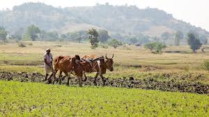 Image result for Farmers in 3 Marathwada villages create oasis in suicide-prone region