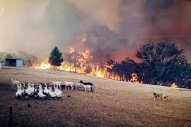 Image result for Man films narrow bushfire escape in South Australia