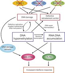 Compare Dna And Rna Venn Diagram Genome Wide Dna Hypomethylation And Rna Dna Hybrid