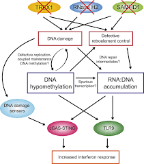 Venn Diagram Comparing Dna And Rna Genome Wide Dna Hypomethylation And Rna Dna Hybrid