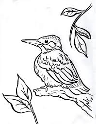 kingfisher animal coloring pages