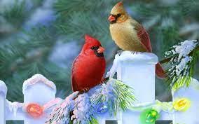 Free Winter Birds Desktop Wallpaper on ...