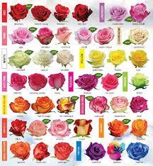 207 best flower names images on flowers flower types