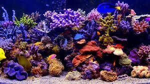Live Aquarium Desktop Wallpaper Windows ...