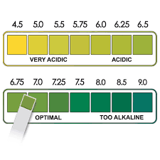 Ph Level Chart For Urine Dry Urine Test Strip Buy In Vitro Urine Reagent Test Strips Urine Test Strips Yercon Urine Strips Product On Alibaba Com