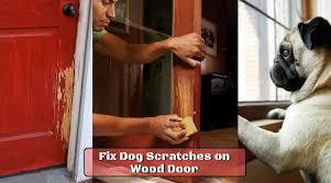 how to fix dog scratches on wood door