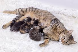 dogs and cats mating together. Fine Cats On Dogs And Cats Mating Together 2