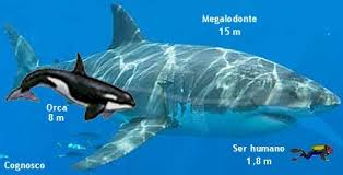 megalodon shark compared to killer whale. Brilliant Whale Orca Are Large Animals And I Would Think Six Of Them Could Manage The Job  Kill Sharks By Ramming Their Gill Slits To Destroy Gills Throughout Megalodon Shark Compared To Killer Whale N