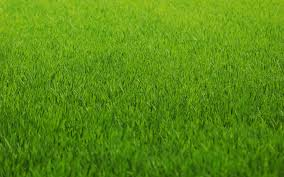 grass texture hd. Macro Green Abstract Pattern Grass Texture Beautiful Nature Hd Wallpapers Free Download