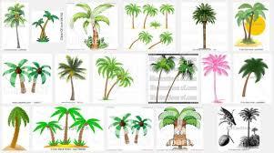 tree plantation clipart  coconut palm tree clipart