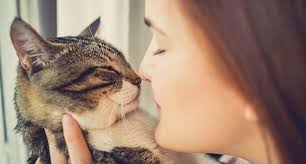 Image result for cat human love