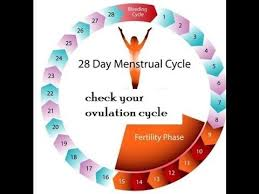 Period Cycle Chart Menstrual Cycle Calculator Youtube With Regard To Period