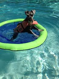 pool floats for dogs. Brilliant Floats Dog Toys For Pretty Pool Accessories For Dogs And Pool Toys Charlotte Nc To Floats S