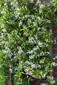 Choose The Right Trellis For Your Climbing Vegetables  Tenth Acre Climbing Plants For Fence
