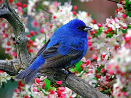Birds Backgrounds free download ...