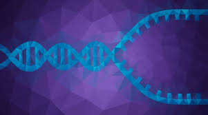 What Is Dna Replication Facts Yourgenome Org