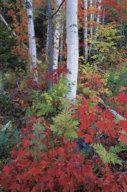 Small Picture Top Trees for Colorful Fall Foliage Garden Design