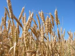 Тема топик Сельское хозяйство текст английский язык топик Сельское хозяйство