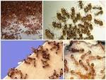 Как избавится от черных муравьев в домашних условиях