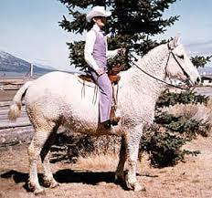 Американский кучерявый башкир кучерявые лошади происхождение  Американский кучерявый башкир