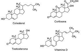 diferencia entre esteroles y esteroides