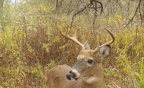 opening day of deer season is going to