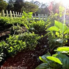 Small Picture An herbal tea garden httpwwwcountrylivingcommobileoutdoor