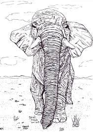 Ekening Van Een Olifant Getekend Door Brigit Weeda
