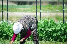 「農作業 画像 フリー」の画像検索結果