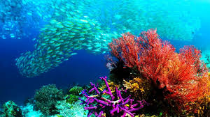 High Definition Pictures Fish Nature High Definition Sea Cool Fishes Sealife