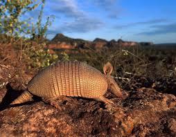Природа растения и животные Южной Америки Животный мир Южной Америки