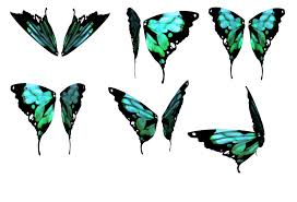 Image result for butterfly wings images