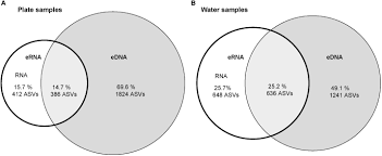 Compare Dna And Rna Venn Diagram Frontiers Linking Environmental Dna And Rna For Improved