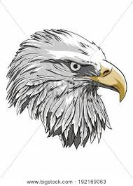 bald eagle template eagle head logo template hawk vector photo bigstock