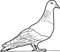 Small Picture Pigeons Coloring Pages Inside Pigeon Coloring Page esonme
